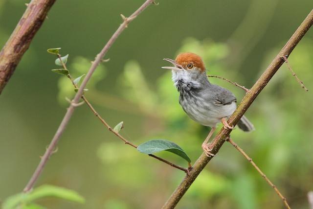 Naujos paukščių rūšys atrandamos ne tik džiunglėse