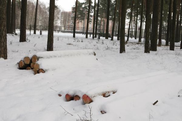 Klaipėdos miškeliuose iškirsta apie du šimtus medžių