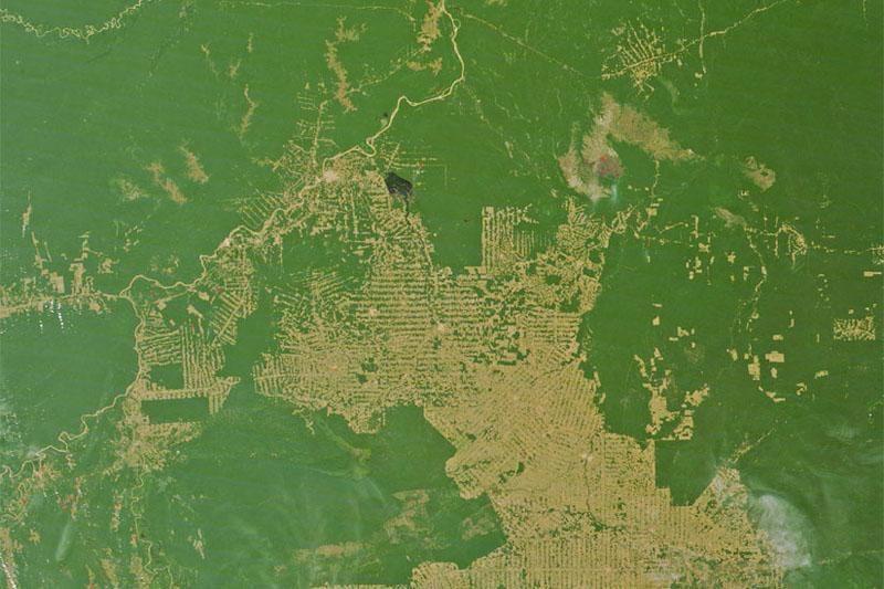 Amazonės miškai: sumažinus kirtimų mastą – trys naujos problemos
