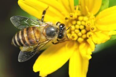 Bitė pražudė Šilutės r. gyventoją