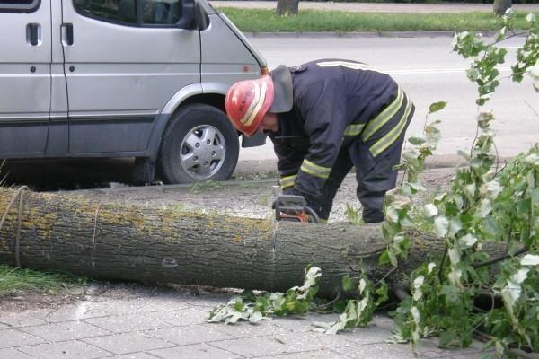 Pajūryje stiprus vėjas guldė medžius (papildyta)