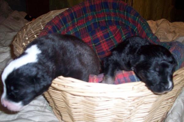 Gyvi užkasti ir išgelbėti šunyčiai turi laikinus namus