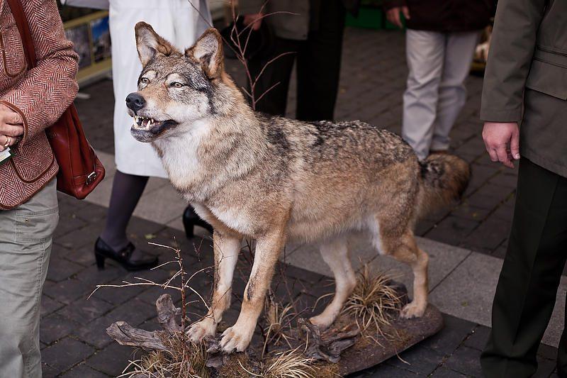 Paminėti savo profesinę šventę miškininkai rinkosi į Vilnių