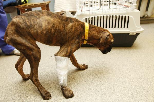 Klaipėdiečiai sužalotą šunį paliko mirti