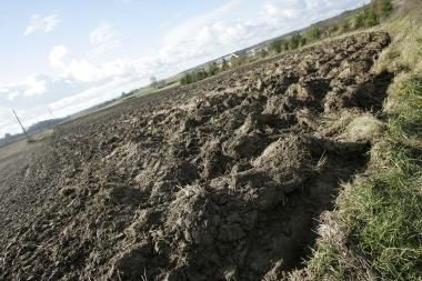 Kauno rajone bus kasamas anhidritas