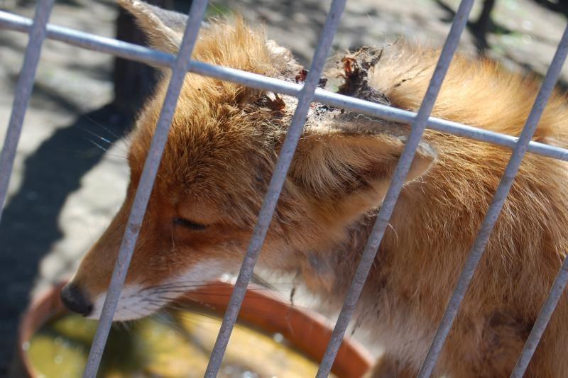 Sužalotas gyvūnas - zoologijos sodo kasdienybė? (foto)