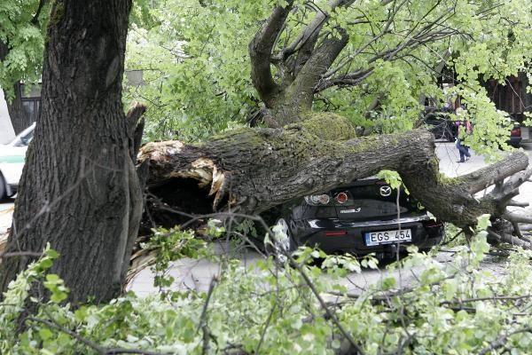 Kauno centre nuvirtęs topolis prispaudė apynaujį automobilį (papildyta)