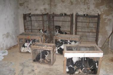 Kėdainietė bute laikė 38 šunis
