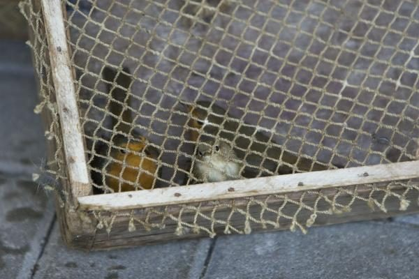 Savaitgalio planas: Migruojantys paukščiai. Ventė