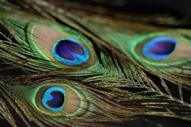 Neandertaliečiai puošėsi spalvotoms plunksnomis