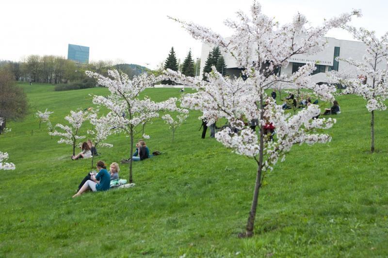 Vilniuje planuojama įrengti japonišką sodą