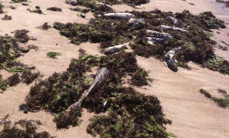 Karklės paplūdimiuose - dar vienas poilsiautojų išbandymas (foto)