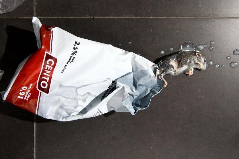 Šokas: pieno pakelyje kaunietis rado pelę!