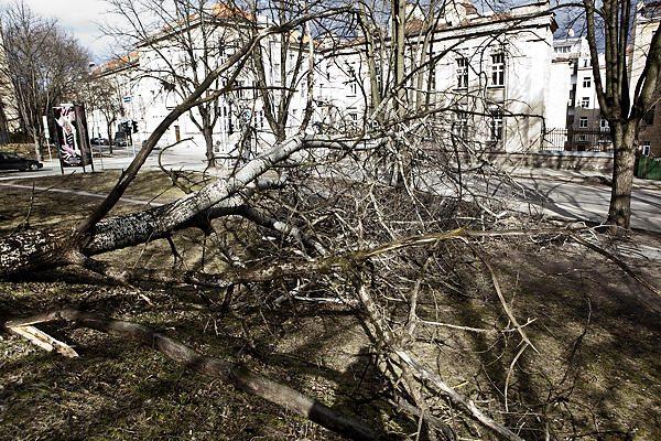 Stiprus vėjas vertė medžius, be elektros liko 3 tūkst. vartotojų