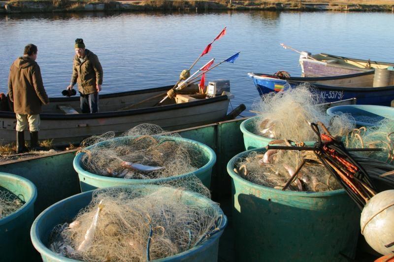 Nemuno deltoje – neregėti stintų laimikiai