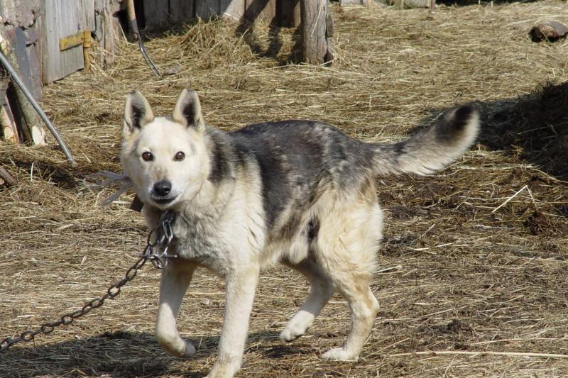 Šiukšlyno šunys - kai būdą atstoja šlapių lentų rentinys