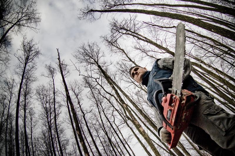 Mediena dažniau grobstoma privačiuose miškuose