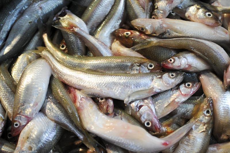 Gyva žuvis maišelyje - įprasta Lietuvoje, bet ne Vakaruose
