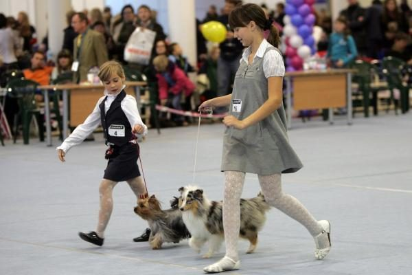 Gražiausiu Europos šunimi išrinktas Niūfaundlendas