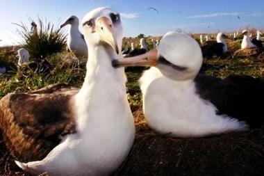 Pingvinai gėjai ir vabalai sadomazochistai juokiasi iš Ch.Darwino