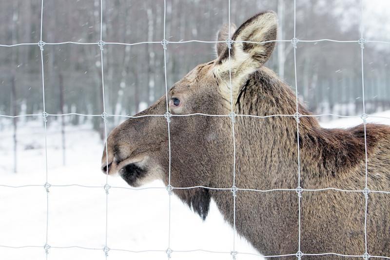 Dideli šalčiai gyvūnų elgsenos nekeičia