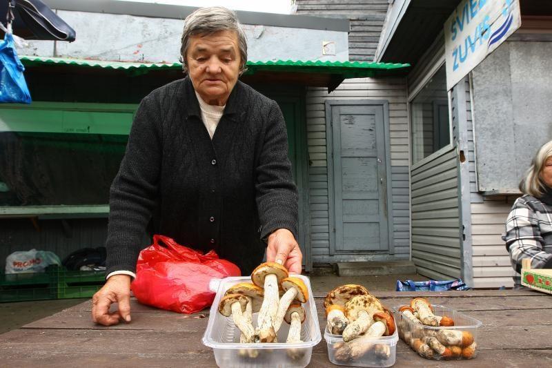 Pirmieji baravykai Kauno turguose – net po 45 litus už kilogramą