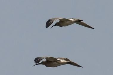 """Pajūryje - paukščių stebėtojų ralis """"Kuršių marios 2009"""""""