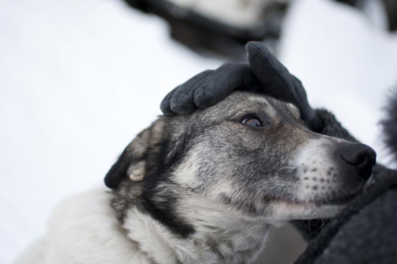 Nuo šunų išmatų Kauną gelbės naujos šiukšliadėžės