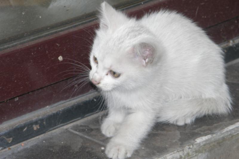 Tikra meilė tik tarp kačių ir žiurkių