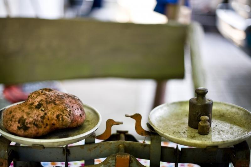 Vilijampoliečio pasididžiavimas – neregėto dydžio bulvė