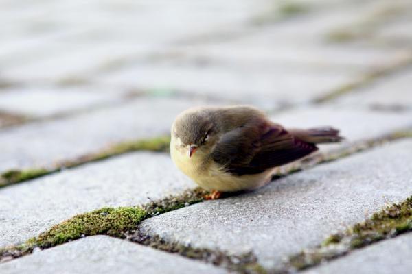Į pastatus atsitrenkiančius paukščius išgelbėtų lipdukai?