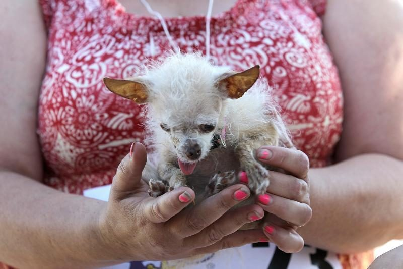 Nugaišo bjauriausiu pasaulio šunimi tituluota kalytė