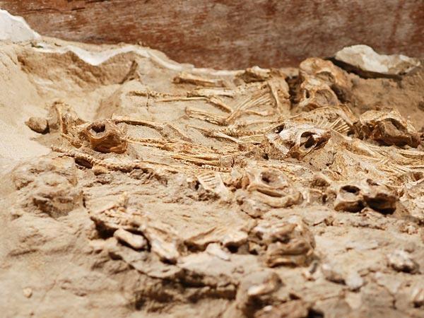 PAR aptikta seniausia dinozaurų lizdavietė