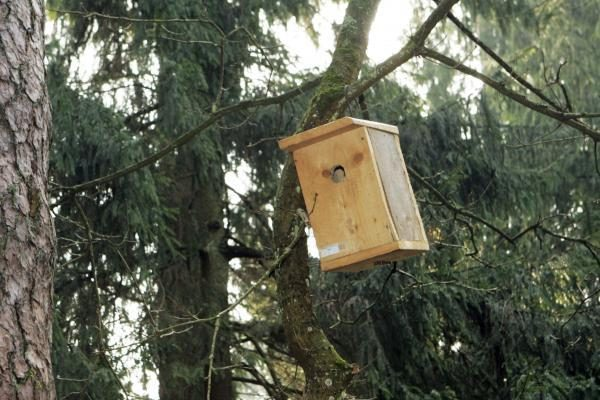 Dovana sugrįžtantiems paukščiams – inkilai