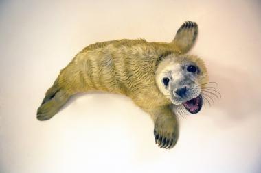 Neformalios Jūrų muziejaus naujienos - tinklaraštyje