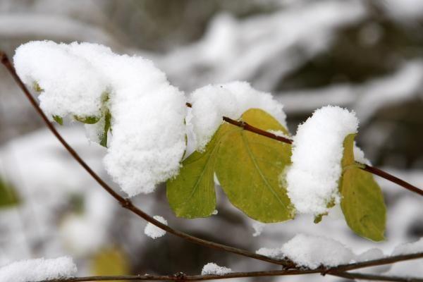 Klaipėdos kelininkai: pirmasis sniegas dzin
