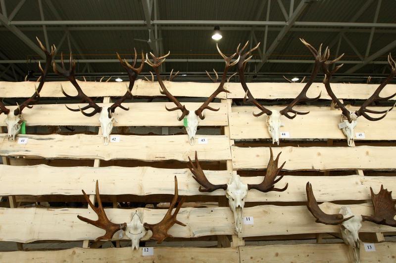"""""""Sprendimų ratas"""": medžioklės trofėjai ir elnių kvieslių varžybos"""