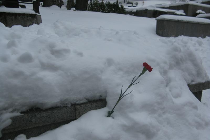 Raudonosios armijos dieną gėlių nepagailėta ir Napoleono kariams