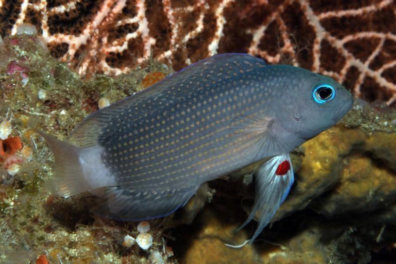 Keisti faktai apie gyvūnus: vištos keičia lytį, žuvis kankina nemiga