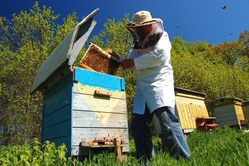 Prezidentė: ten, kur gerai bitėms, gerai ir žmonėms