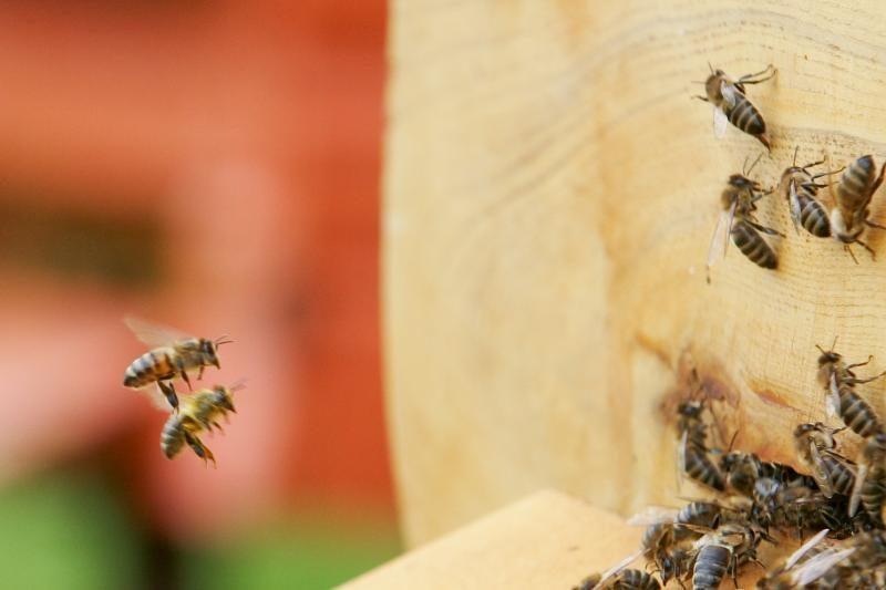 Ukmergės rajone buvo pavogti penki aviliai, du iš jų – su bitėmis