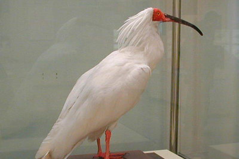 Toksinės atliekos paukščius paverčia homoseksualiais