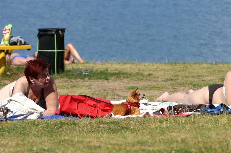 Nepaisant draudimų, į pliažą – su šunimis