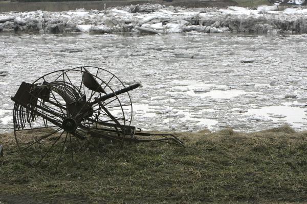 Neris priviliojo gausybę smalsuolių, Nevėžis išsiliejo į pievas (dar papildyta)