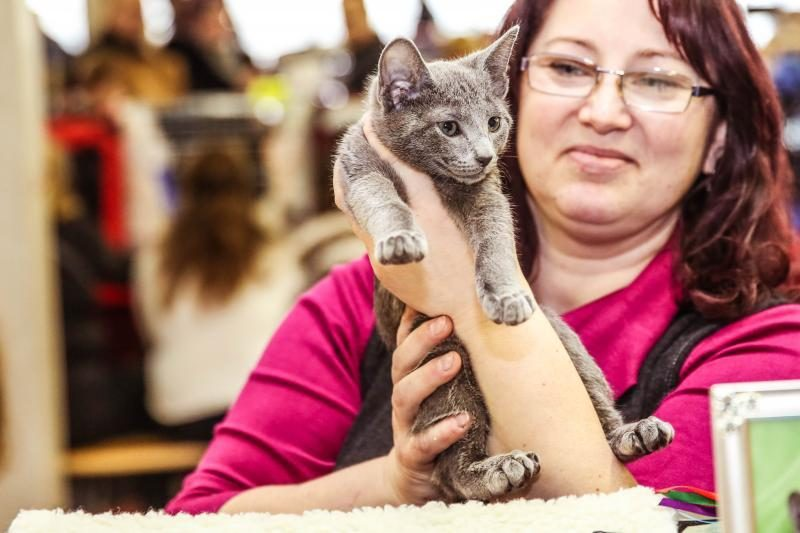 """""""Megoje"""" miauksėjo katės, kurioms neatsispiria net vyrai"""