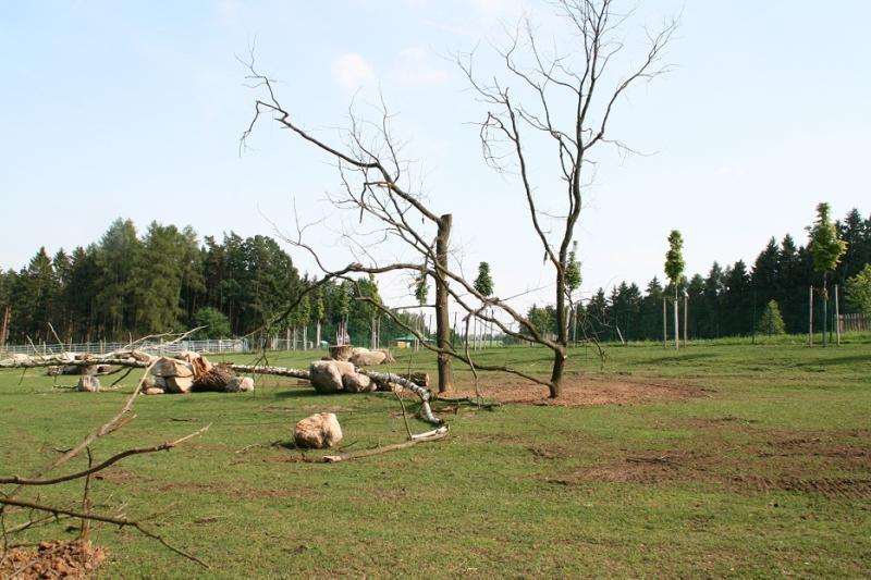 Lietuvos meškinai prieglobstį surado Čekijoje