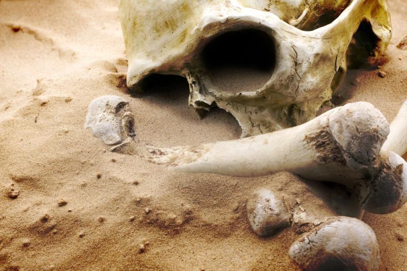 Pasvalio parke rasta kaulų fragmentų