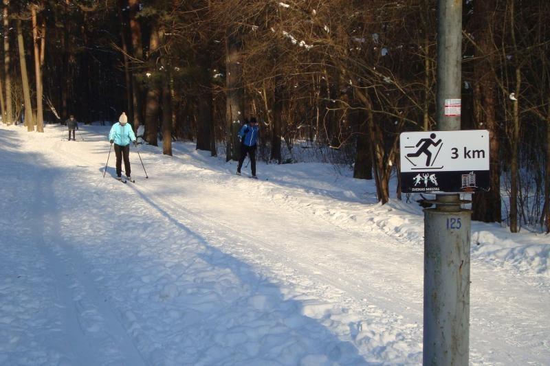 Vingio parke įrengtos lygumų slidinėjimo trasos