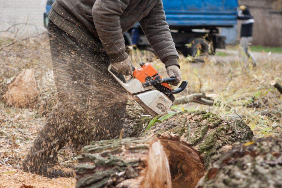 Invazinių medžių kirtimui leidimo nebereikia