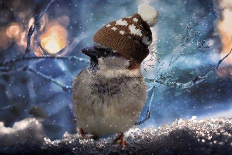 S. Paltanavičius: paukščiai ne apsigavo, bet buvo apgauti